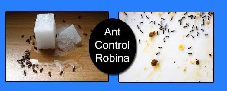 Ant Control Robina