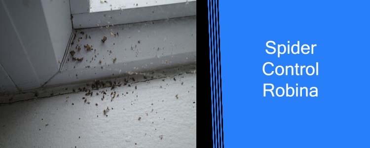 Spider Control Robina